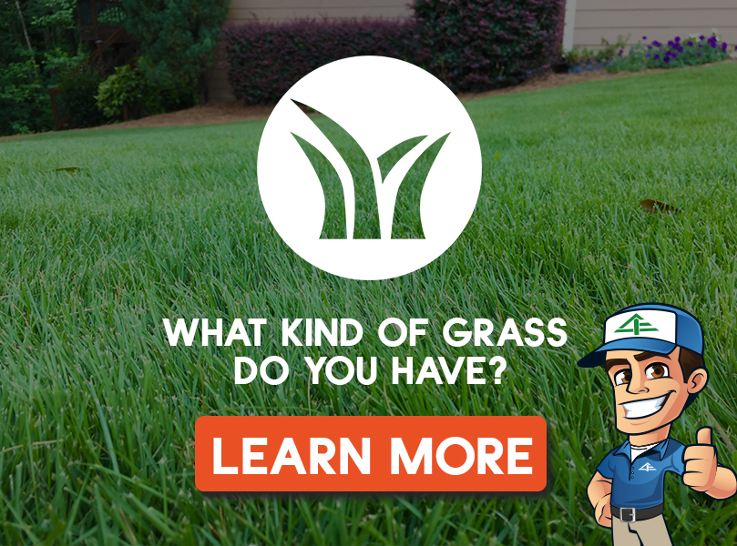 GrassType