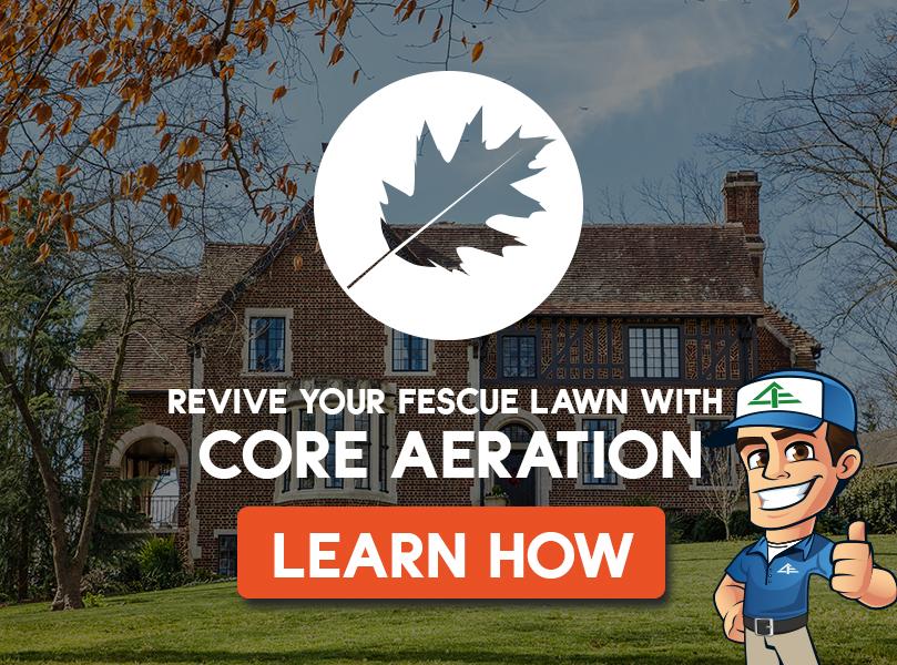 core aeration fall for fescue grass