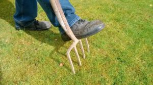aerating with pitchfork