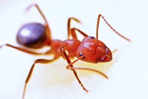 ant closeup