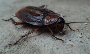 Close-up of cockroach